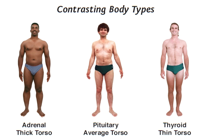 Men's body types require unique diets